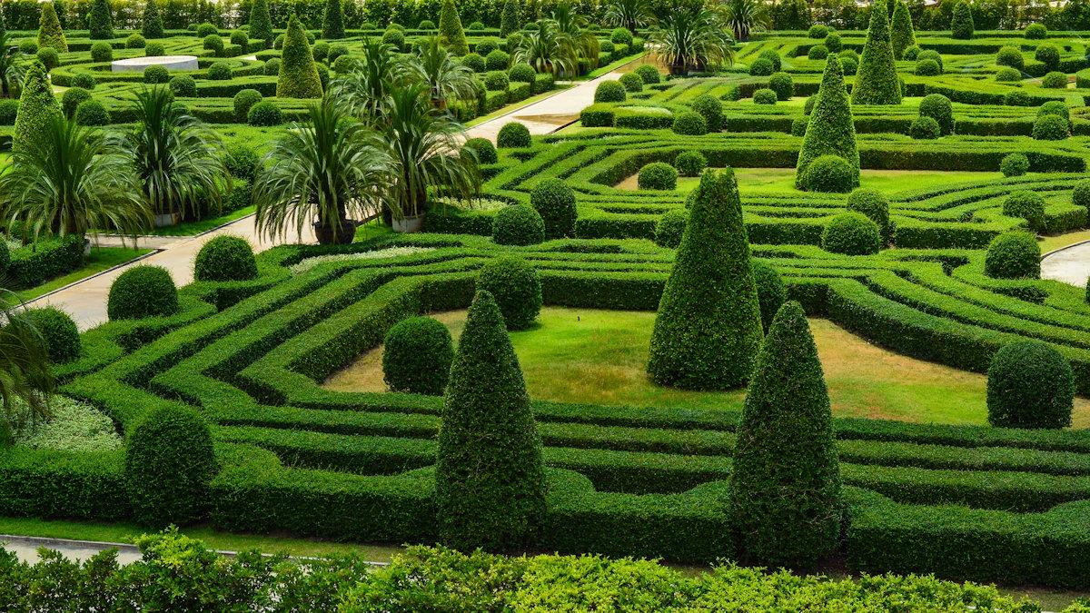 Как выбрать растения для живой изгороди